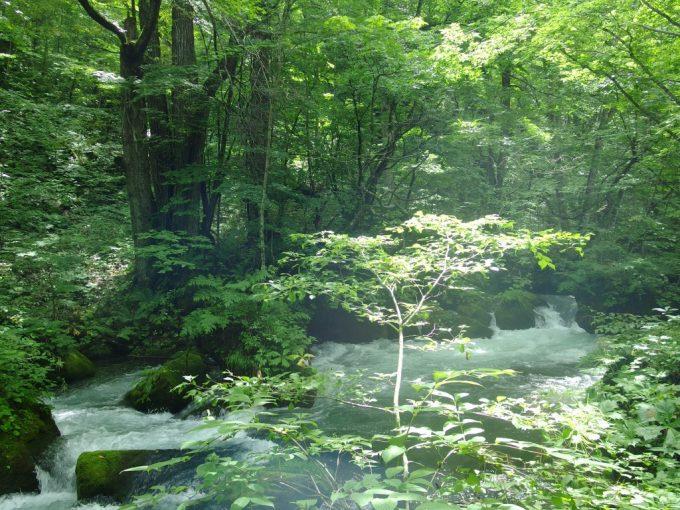 夏の奥入瀬渓流木々のレース越しに降り注ぐ太陽の光