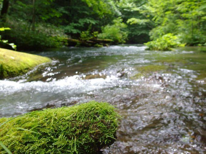 夏の奥入瀬渓流せせらぎと苔むした朽木