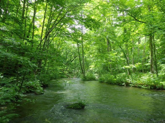 夏の奥入瀬渓流木々に覆われた静かな川の流れ