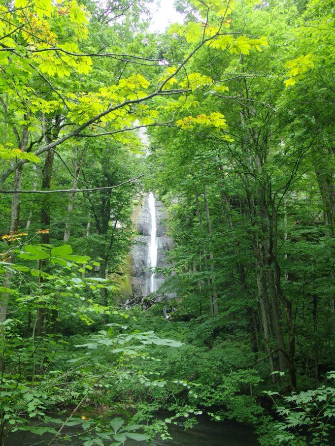夏の緑に彩られる奥入瀬渓流の滝