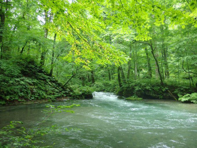 夏の奥入瀬渓流どこを撮っても絵になる光景