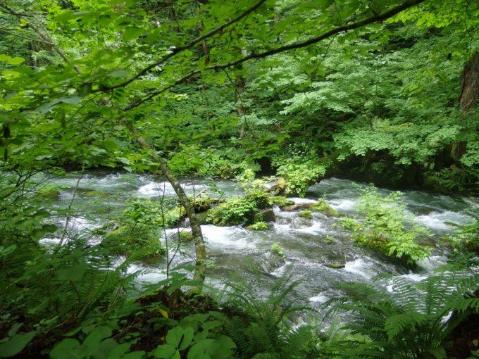 夏の奥入瀬渓流河床に苔むす岩