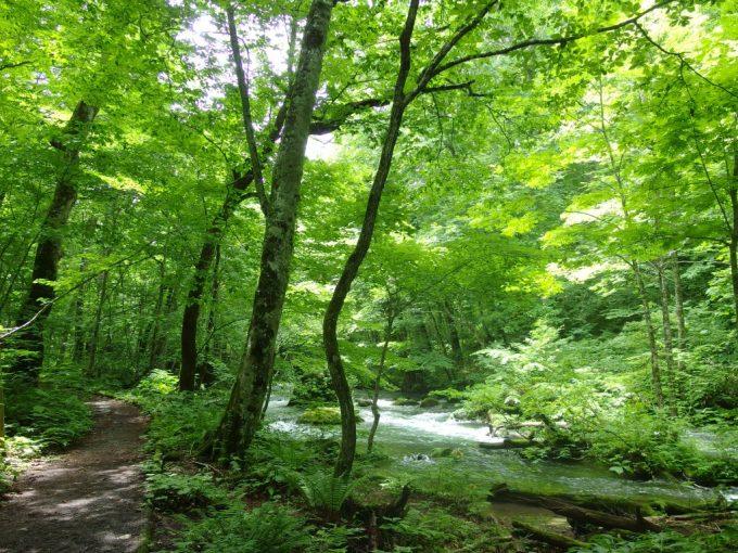 夏の奥入瀬渓流川沿いの遊歩道