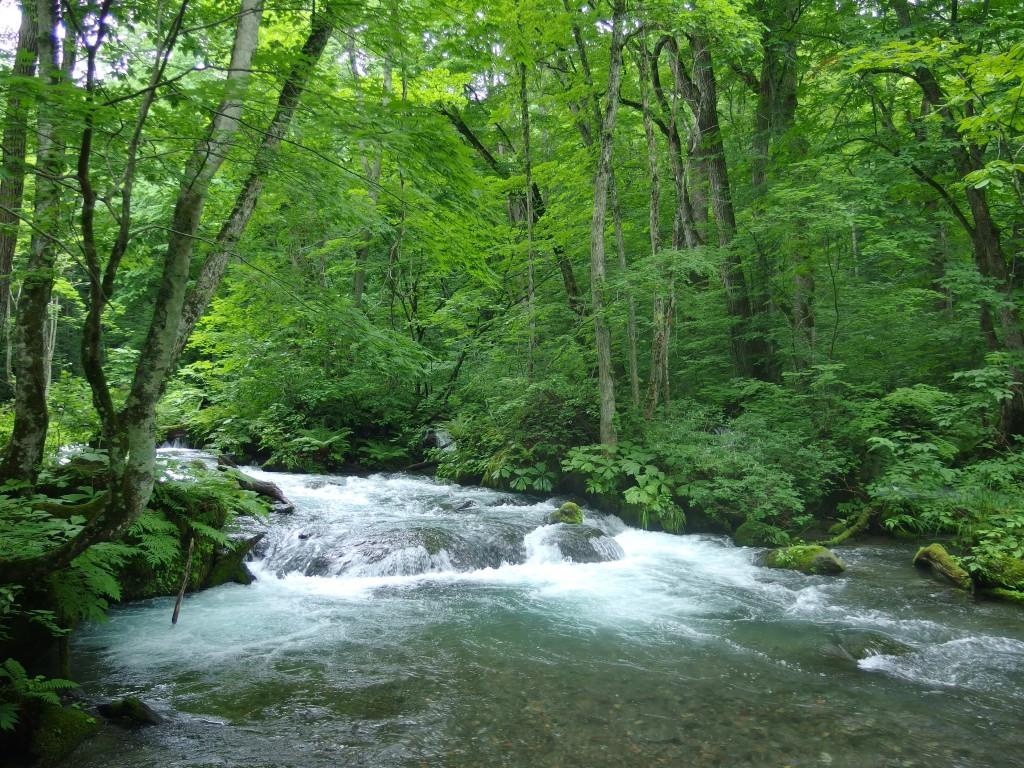 豊富な水量の奥入瀬渓流