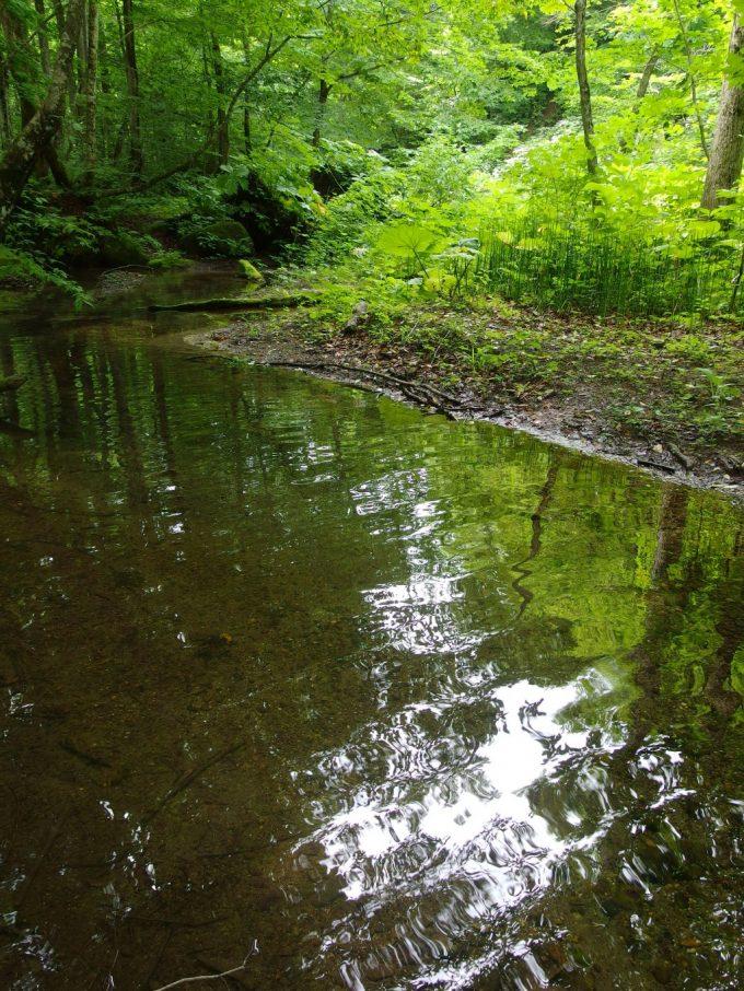 奥入瀬渓流木々の緑を映す浅瀬
