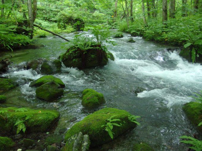 起伏が豊かな表情を作る奥入瀬渓流
