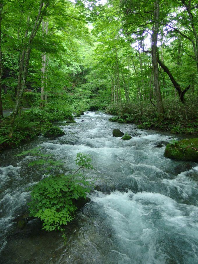 豊富な水が流れる奥入瀬渓流