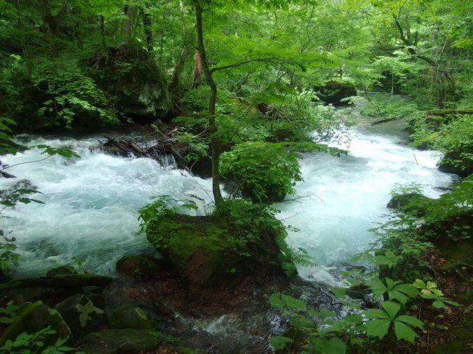 夏の奥入瀬渓流青い水の流れ