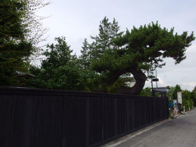 弘前市仲町重要伝統的建造物群保存地区黒い板塀と立派な松