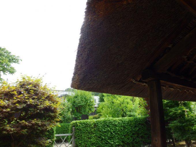 弘前武家屋敷旧梅田家茅葺屋根越しに眺める夏の生垣