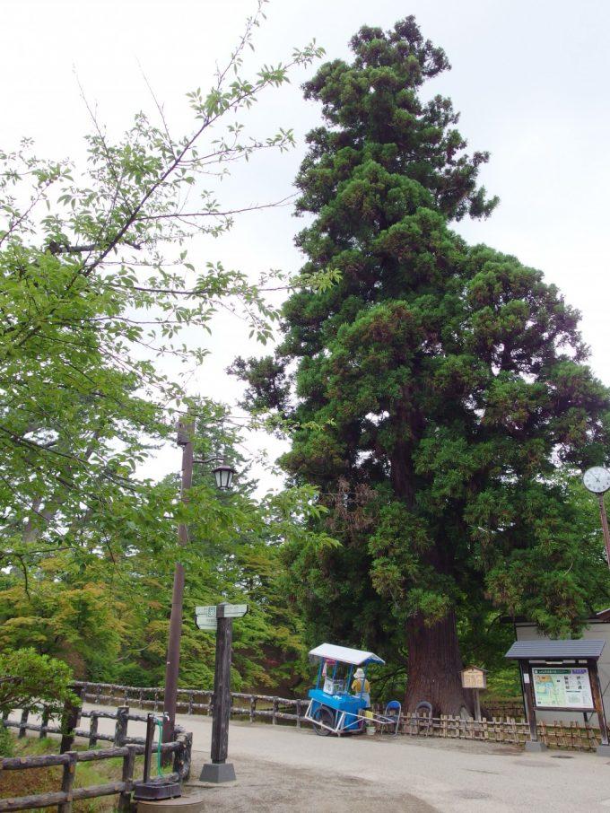 弘前城杉の大木と弘前アイス組合の屋台