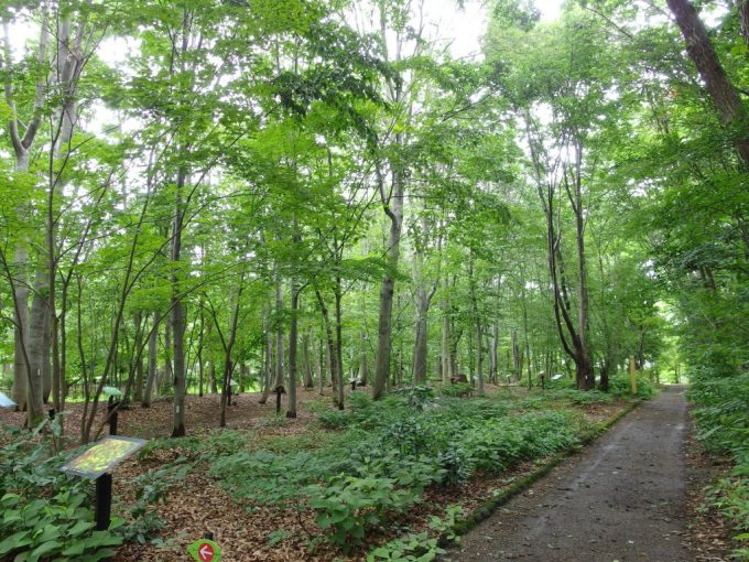 弘前城植物園白神山地生態園