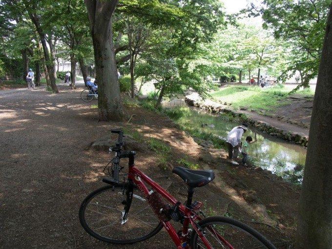昔ながらの土手の井の頭公園内神田川の流れ
