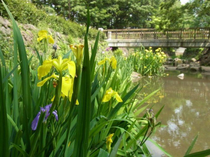 井の頭公園内神田川土手に咲く可憐な花