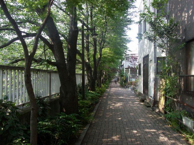 神田川沿いの木々