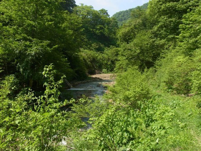 初夏の若葉と夏油川