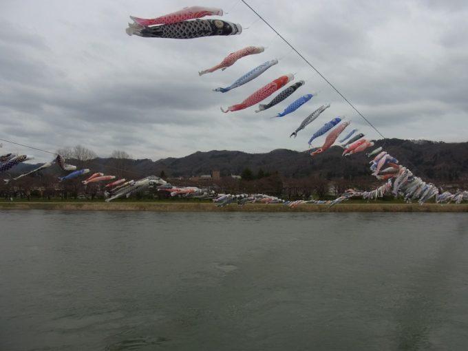 大河北上川の上空を泳ぐ鯉のぼりの群れ