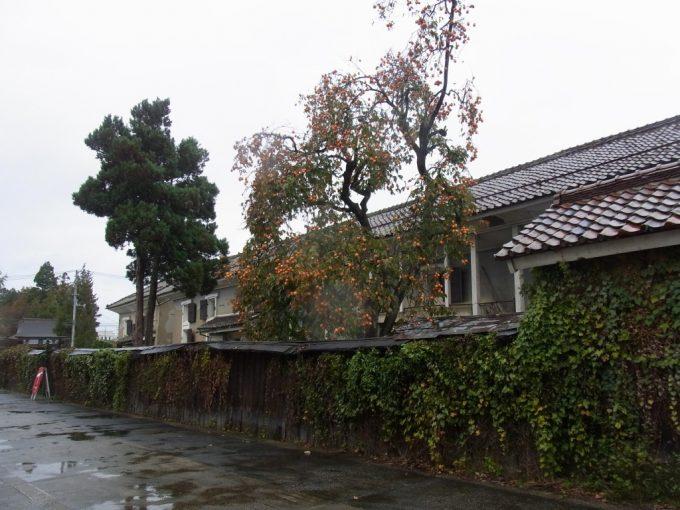 雨の喜多方蔵に板塀秋の柿