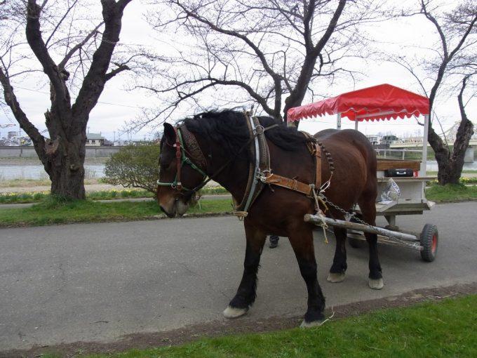 北上展勝地馬車をひくかわいい馬