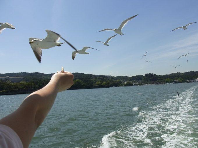 松島遊覧船からカモメにかっぱえびせんをあげる