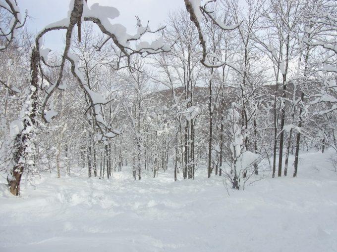 ニセココース外の深い雪に立ち往生