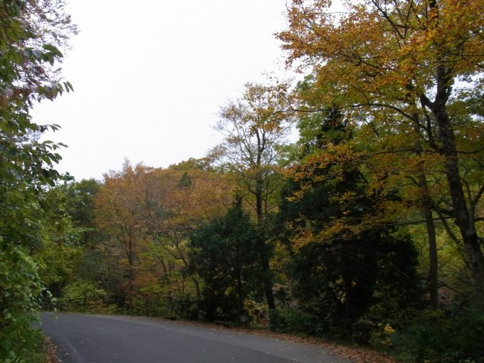 白神山地秋の紅葉