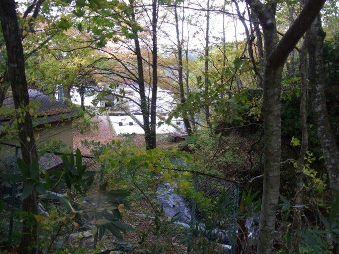 秋の十二湖イトウの養殖場