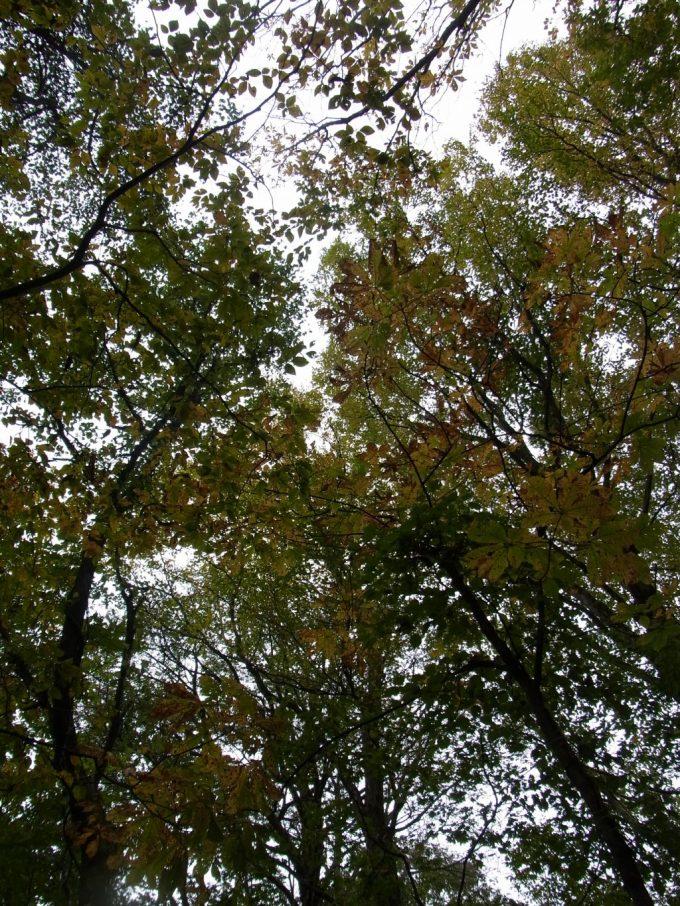 秋の白神山地色づく木々