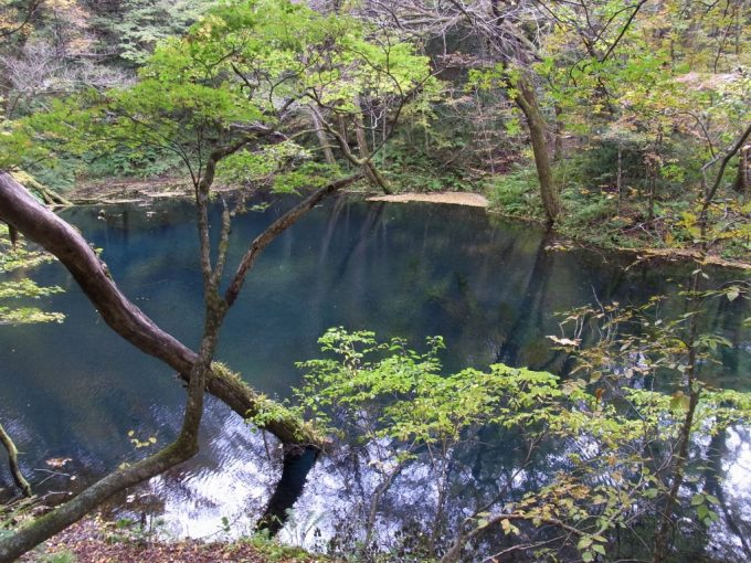 深い蒼さをたたえるっ十二湖沸壺の池