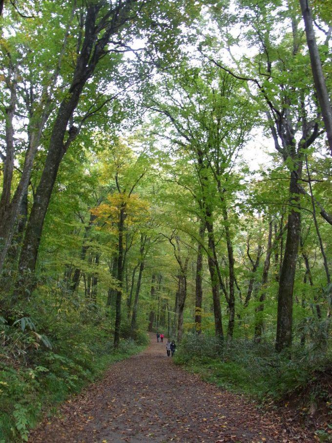 秋の白神山地ブナ自然林