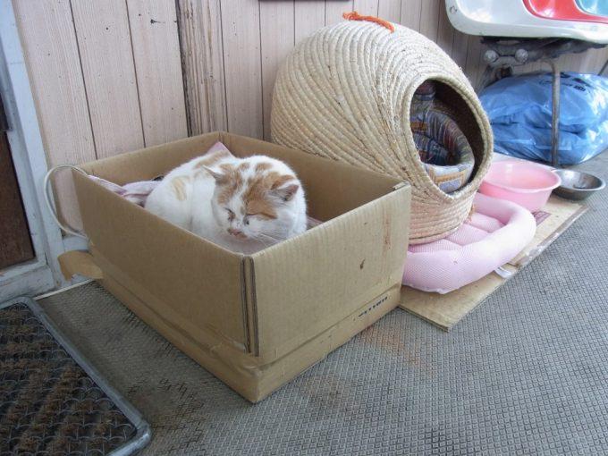 比羅夫駅に住む猫しま太郎