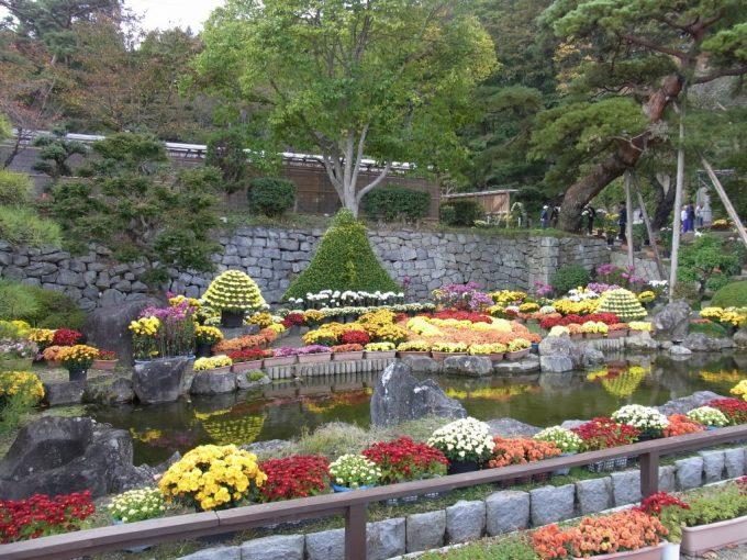 秋の二本松霞ヶ城跡菊まつり色とりどりの菊