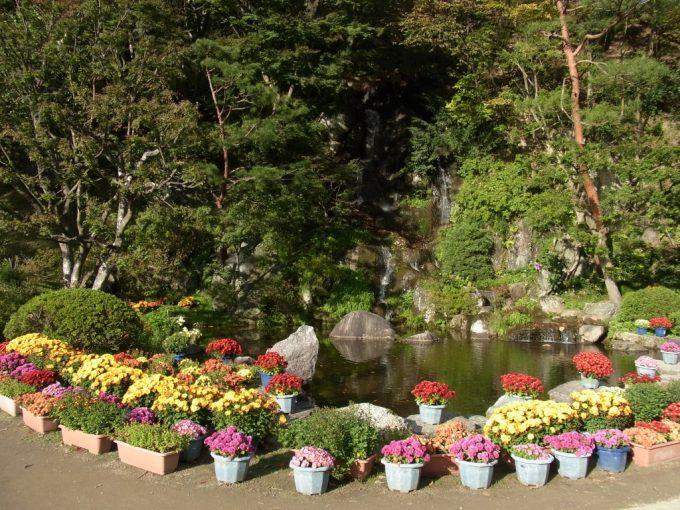 秋の二本松霞ヶ城跡菊まつり池を彩る菊