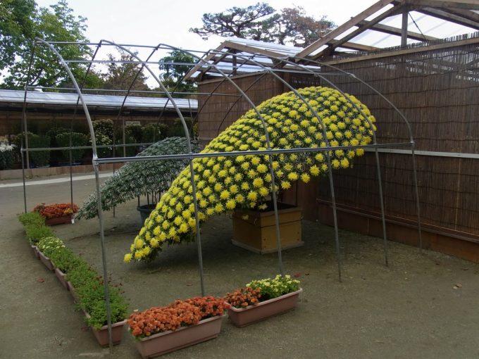 秋の二本松霞ヶ城跡菊まつり立派な菊の数々