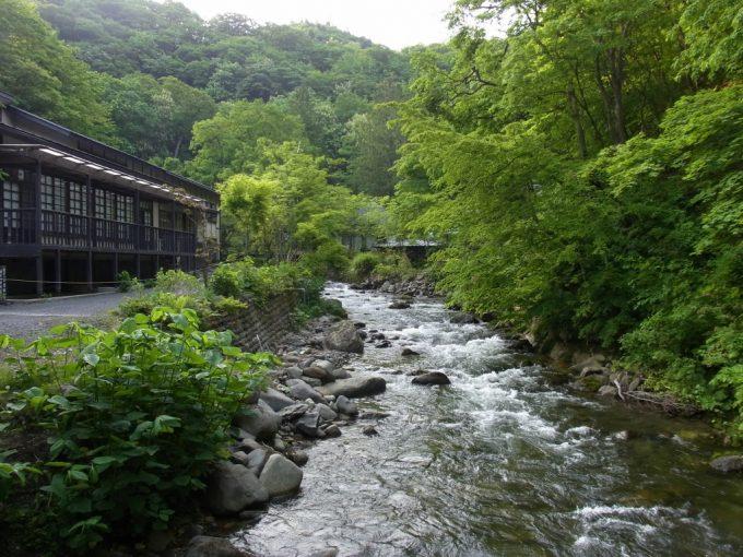 初夏の新緑青荷川