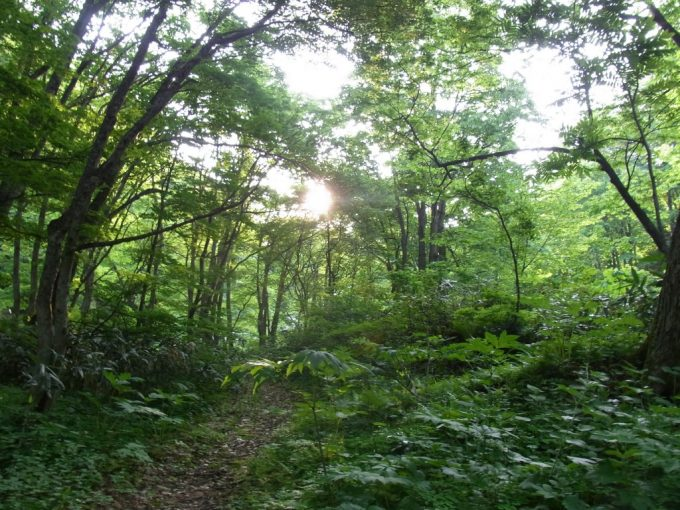 秘湯ランプの宿青荷温泉新緑のレース越しに眺める朝日