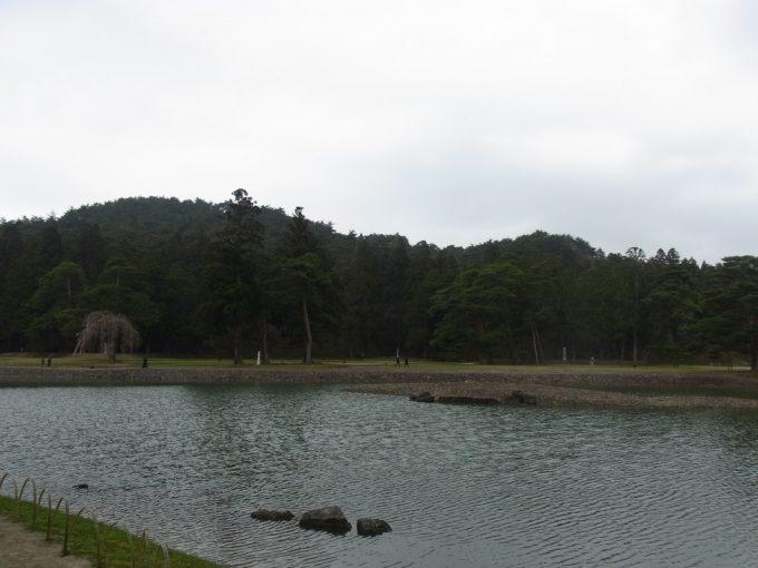 春の平泉毛越寺大泉ヶ池中島と桜