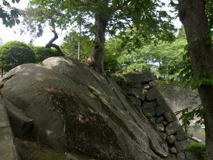 岩手公園石を割って生える木