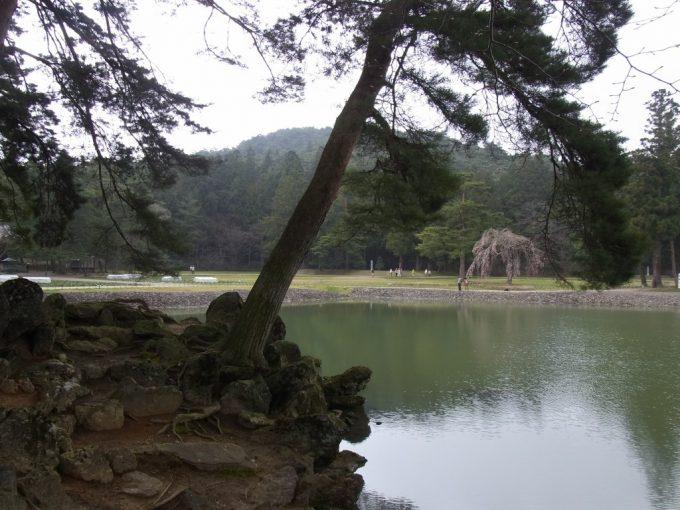 平泉毛越寺築山と松