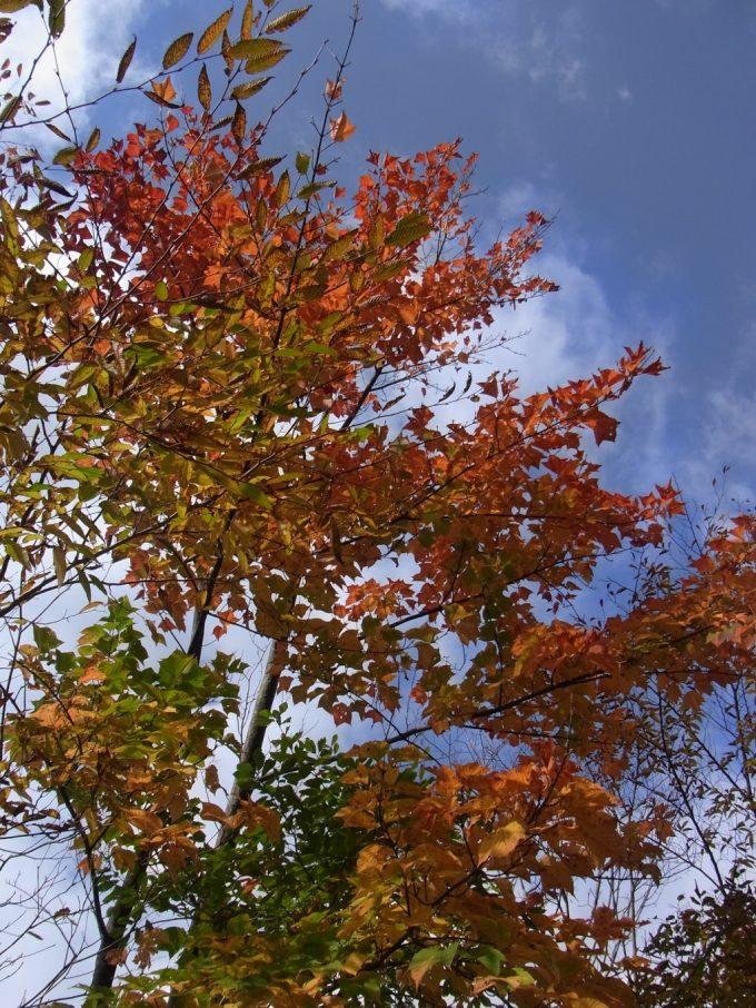 燃える紅葉と抜けるような青い秋空