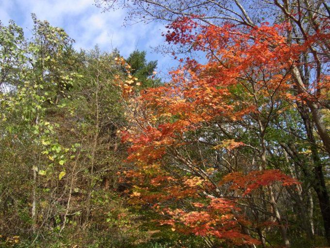 秋真っ盛りの福島見事な紅葉