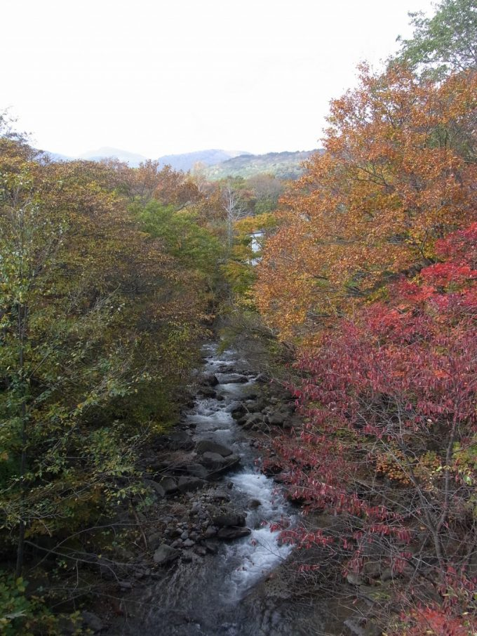秋の小川を彩る色付いた木々
