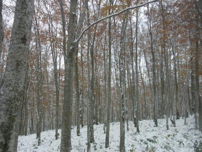 雪と紅葉奇跡の共演
