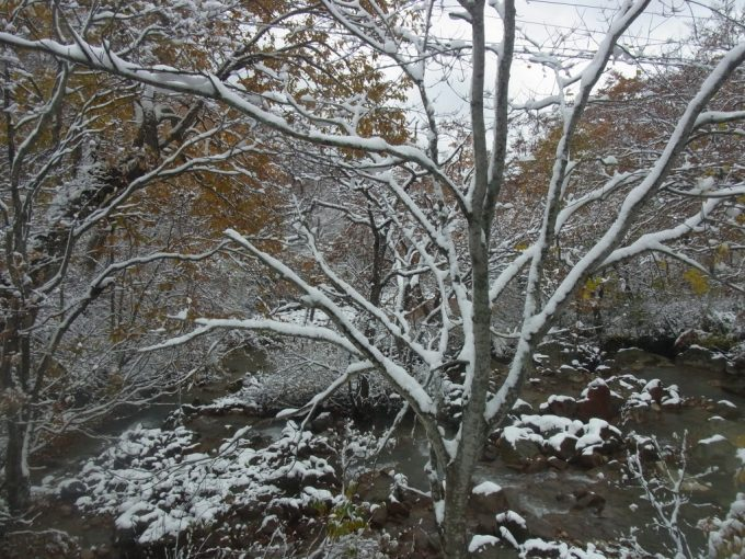 奇跡の光景紅葉雪景色