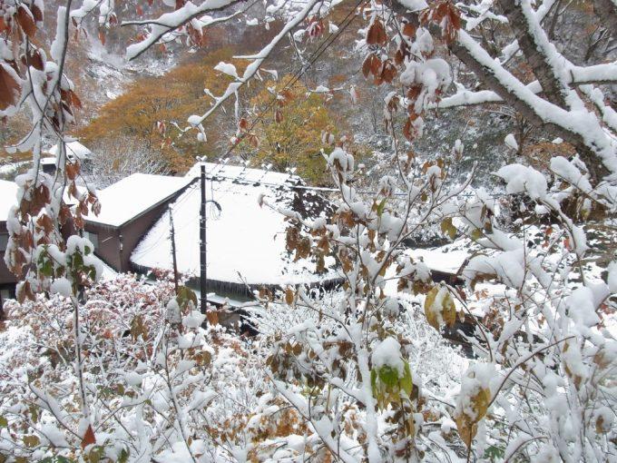 乳頭温泉郷黒湯温泉雪と紅葉から垣間見える茅葺屋根