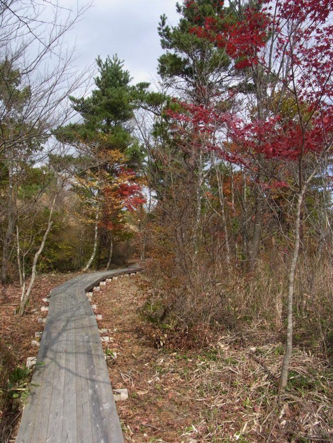 秋の福島土湯きぼっこの森木道と紅葉