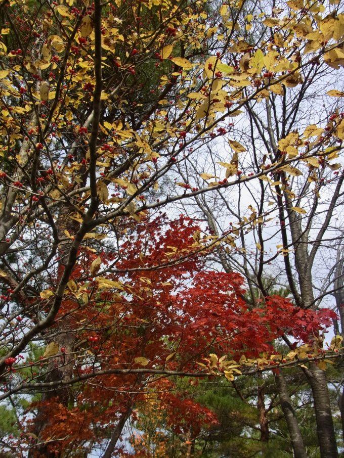 秋の福島土湯きぼっこの森盛りの紅葉