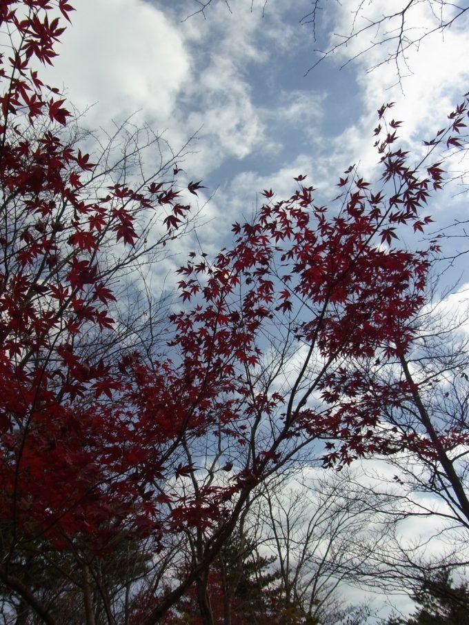 抜けるような天高き秋空と深紅の紅葉
