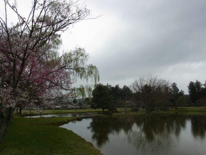 春の平泉観自在王院跡桜と柳の競演