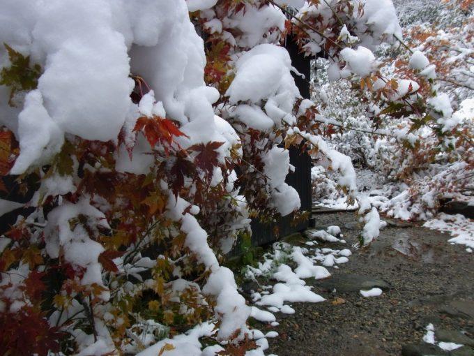 紅葉に積もる雪奇跡の組み合わせ